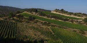 Vue sur les terres du domaine Chateau Maris