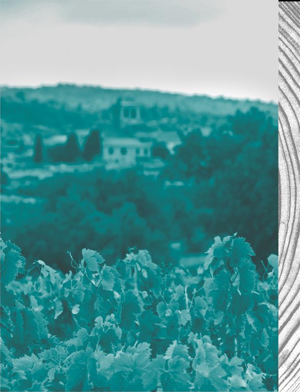 Vue sur des vignes et un village en fond